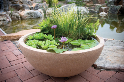 Aquatic Garden, Water garden, patio pond